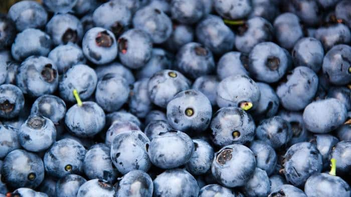 11 Reasons Why Eating Blueberries is Beneficial