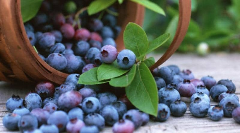 7 Awesome Reasons for Eating Blueberries